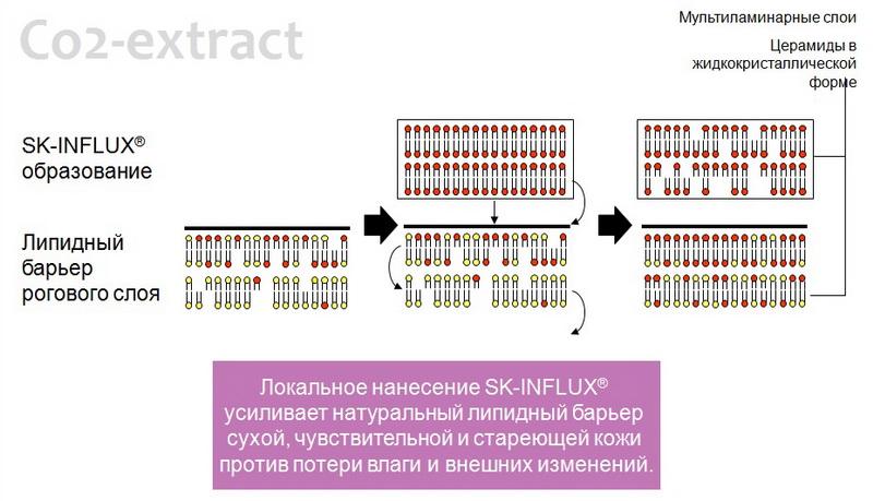 действие sk influx ceramide complex 3